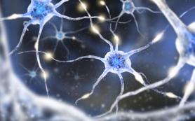 Биофизики МФТИ нашли ключевую особенность переключателя нервных клеток
