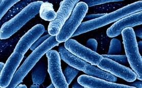 Наночастицы помогут бороться с устойчивыми к антибиотикам бактериями
