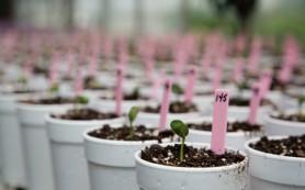 Российские исследователи придумали, как предсказать эффективность удобрений