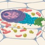 Испанские биоинфроматики вычислили, когда клетки научились дышать