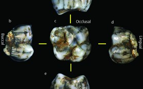 В ЮАР нашли кости людей возрастом более 2 миллионов лет