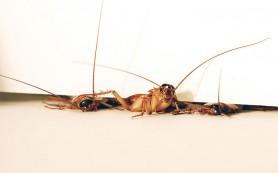Почему таракана трудно раздавить