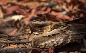 Птицы и зебры: кому и для чего нужна маскировка