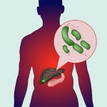 Кишечные бактерии участвуют в развитии повреждений печени под действием алкоголя
