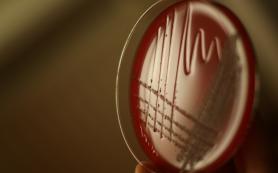 Ученые обнаружили у бактерий коллективную память