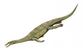 У гигантских морских ящеров были карликовые родственники