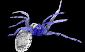 Паук возрастом 305 миллионов лет рассказал об эволюции плетения паутины