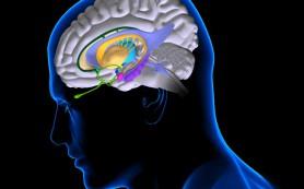 Долгий стресс стирает память