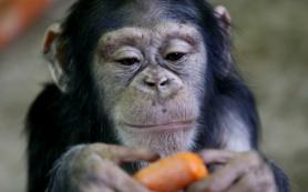 Ученые проанализировали особенности регуляции генов в мозге млекопитающих