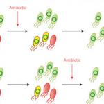 Ученые опровергли миф о том, что антибиотики ускоряют обмен генами у бактерий