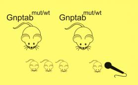 Биологи вывели заикающихся мышей