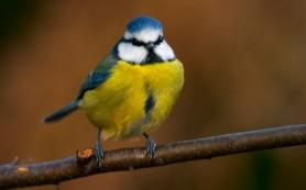 У малых птиц глаз не столько острый, сколько быстрый
