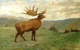 Древнейшего большерогого оленя нашли на юге России