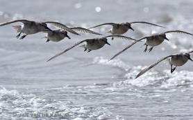 Птицы гибнут в Африке из-за ранней весны в Арктике