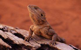 Рептилии спят по-звериному