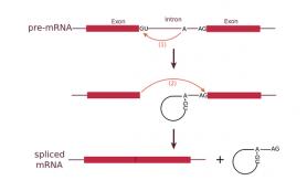 Куда попадают самые «влиятельные» мутации