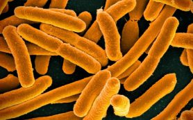 Микрофлора кишечника регулирует процессы в мозге и влияет на поведение