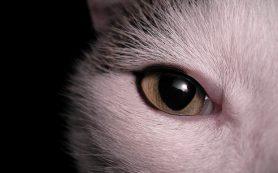 Ученые раскрыли тайну появления ночного зрения у млекопитающих
