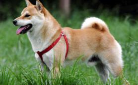 Собак в Европе и Азии одомашнили в разное время