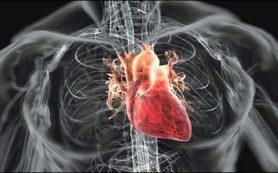 Создано самое мощное в мире сердце