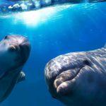 Эхолокационные сигналы дельфинов могут передавать изображение человека