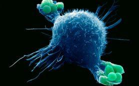 Бактериальную инфекцию от вирусной можно отличить по семи генам