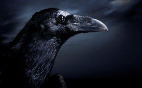 Вороны знают, что такое смерть
