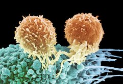 Испытания перспективной терапии рака приостановили после смерти трёх пациентов