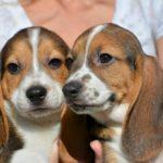 Новая методика позволит бороться с патологиями у собак