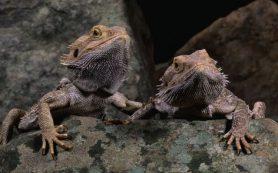 Рептилии могут видеть сны