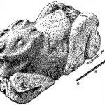 «Кроличью ферму» доколумбовой Мексики нашли по изотопным следам