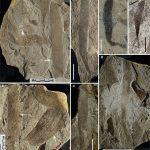 В Китае найдены древнейшие многоклеточные водоросли