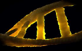 Почему РНК проиграла ДНК «спор за наследство»