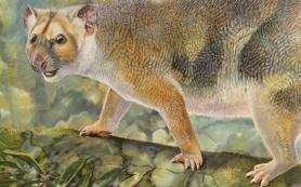 Австралийские палеонтологи обнаружили останки «микрольва»