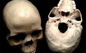 Обмен веществ в мозге оказался важнее его размера для эволюции разума