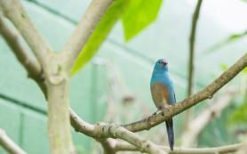 Африканские птицы исполняют матримониальную чечетку