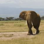 Слоновьи следы полезны водным экосистемам