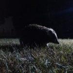 Биологические часы дневных и ночных зверей отличаются по нейронному устройству
