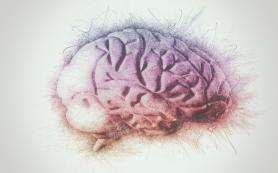 Мозг слепых использует зрительный центр для математических вычислений