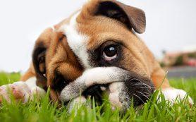 Лечение, причины и симптомы отравления собак