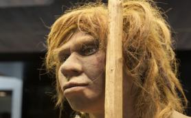 Предки людей болели папилломавирусом уже 500 тысяч лет назад