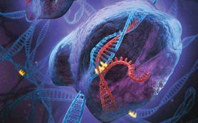 Биологи объяснили хронологию записей в «антивирусной библиотеке» бактерий