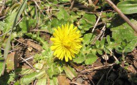 Ученые выяснили, чем городские растения отличаются от растущих в природе