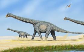 Палеонтологи исследовали самых больших динозавров Центральной Азии