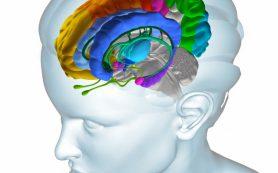 Женский мозг меняется каждый месяц