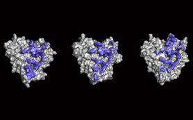 Обнаружено почти универсальное антитело к ВИЧ