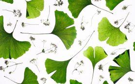 Расшифрован геном растения — живого ископаемого