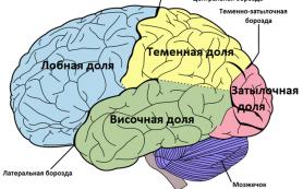 Ученые нашли область мозга, ответственную за «эффект плацебо»