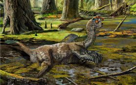 Из грязи в музей: в Китае найден новый вид пернатых динозавров