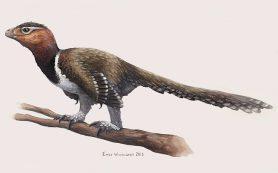 Янтарь сохранил перья динозавра